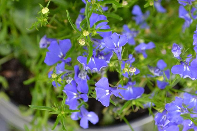 Jak pěstovat na balkoně květiny, i když se vám v tom alergie snaží zabránit 4