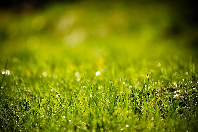 Jak připravit sekačku na jarní práci na zahradě: pečovat o trávník bude hračka
