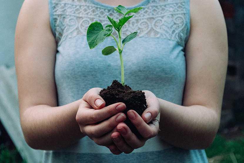 Ruce, rostlinka