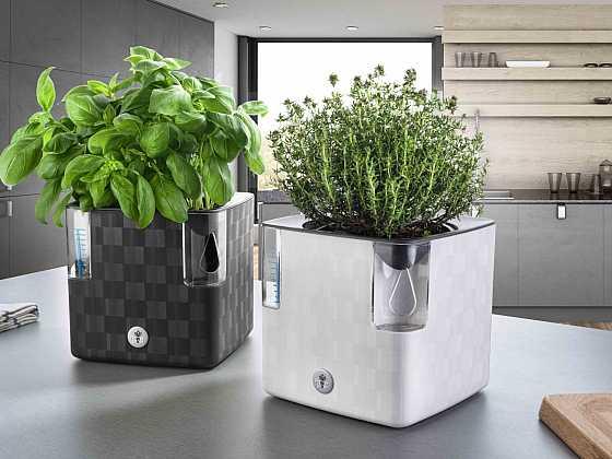 Jak správně pěstovat bylinky, aby se jim u nás líbilo? (Zdroj: Flower Lover)