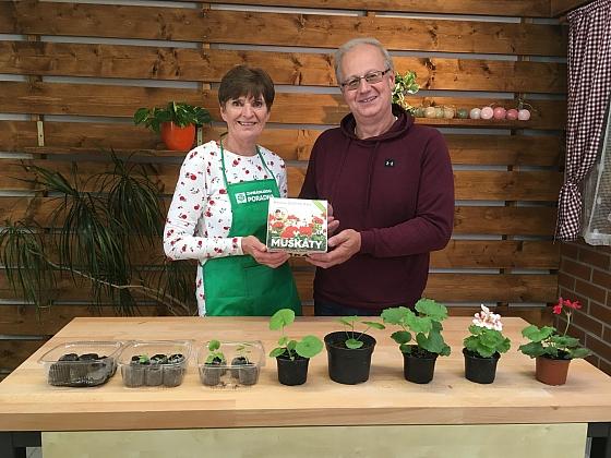 Díky Prima DOMA Boxu si vypěstujete muškáty ze semínek (Zdroj: Prima DOMA)
