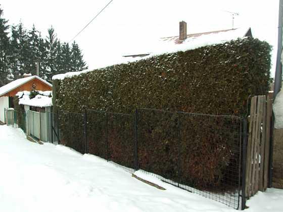 Zelené plůtky, ploty, hradby a skrýše (Zdroj: Ludmila Dušková)