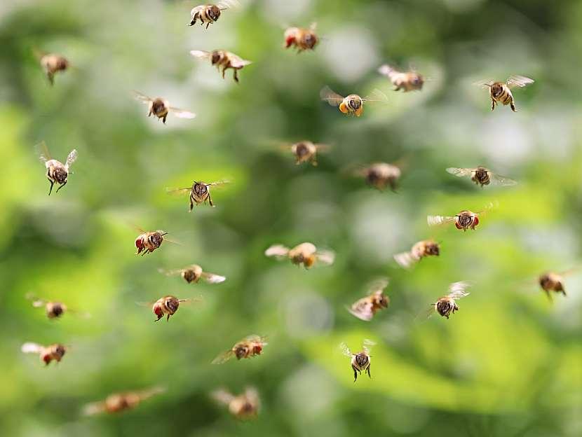 Včely v letu