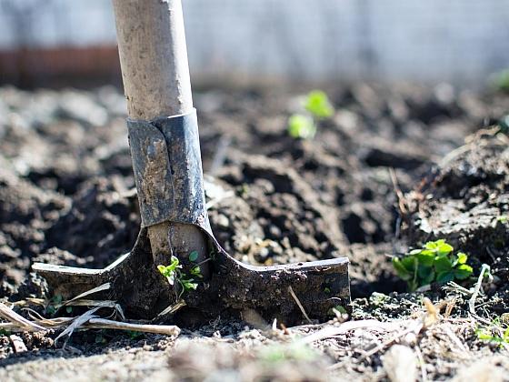 Trápí vás sucho na zahradě? Tyhle tipy vaše záhonky ochrání (Zdroj: Pexels)