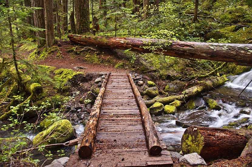 Dotace lze získat i na zpřístupňování lesa turistům a jeho ochranu