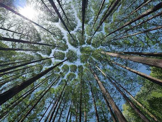Dřevo jako ekologická varianta vytápění? (Zdroj: Schiedel)