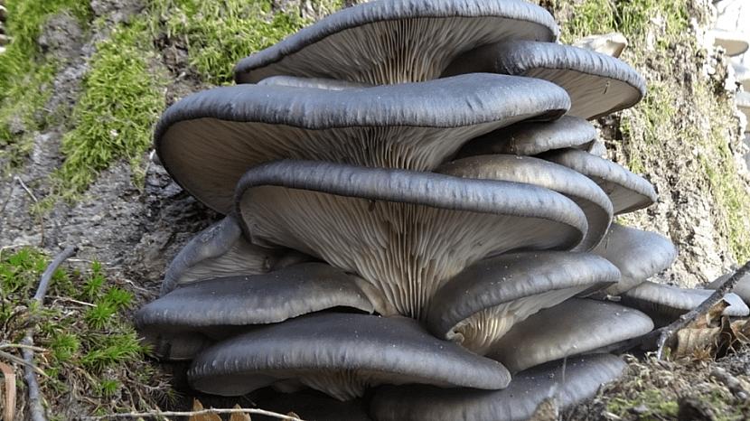 Předpověď počasí a zahrada: čas na pěstování hub