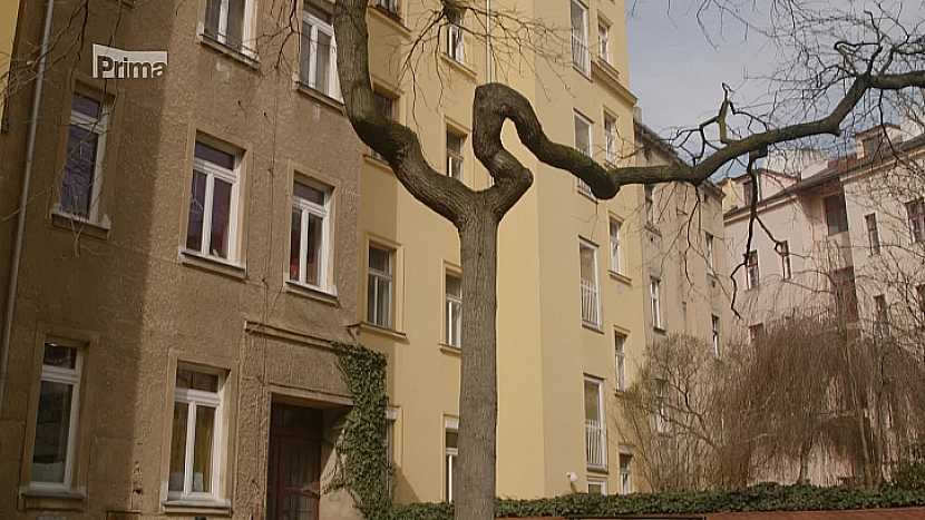 Vzrostlý strom