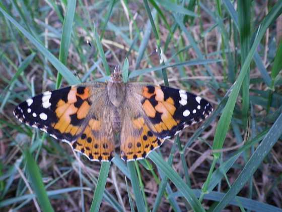 Pusťte motýly do zahrady (Zdroj: Ludmila Dušková)