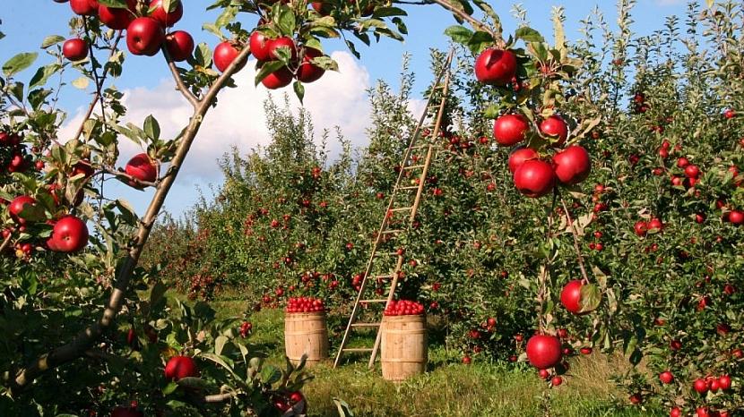 Říjen v zahradě: skliďte všechno ovoce ze stromů