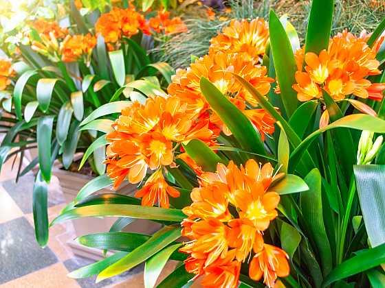 Jak přesadit přerostlé pokojové rostliny? (Zdroj: Depositphotos)