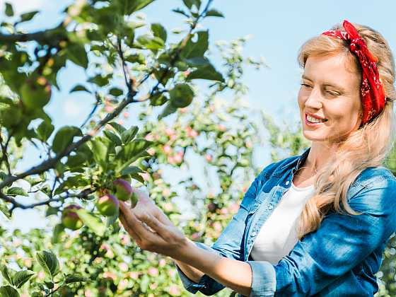 Abyste se dočkali úrody, je třeba o stromy pečovat (Zdroj: Depositphotos)