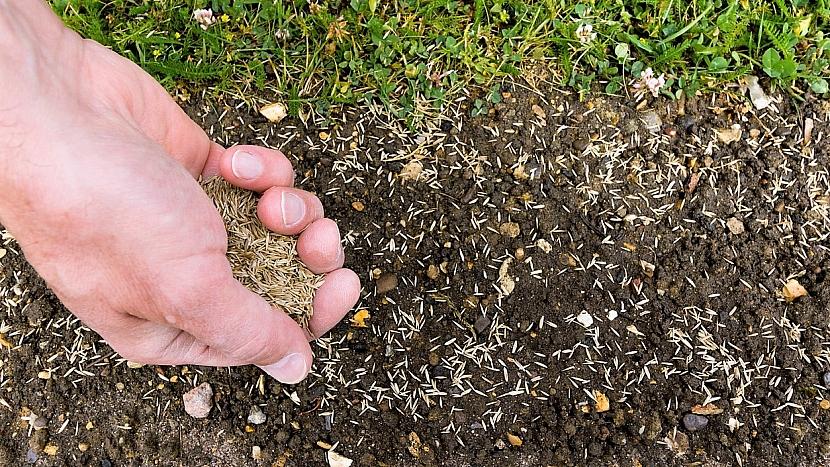Trávník po zimě: když na trávníku objevíte holá místa, zasejte na ně travní směs