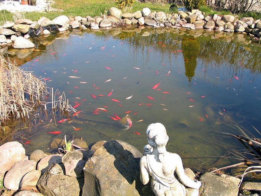 Ryby z malého jezírka musíme na zimu přestěhovat do náhradní nádrže