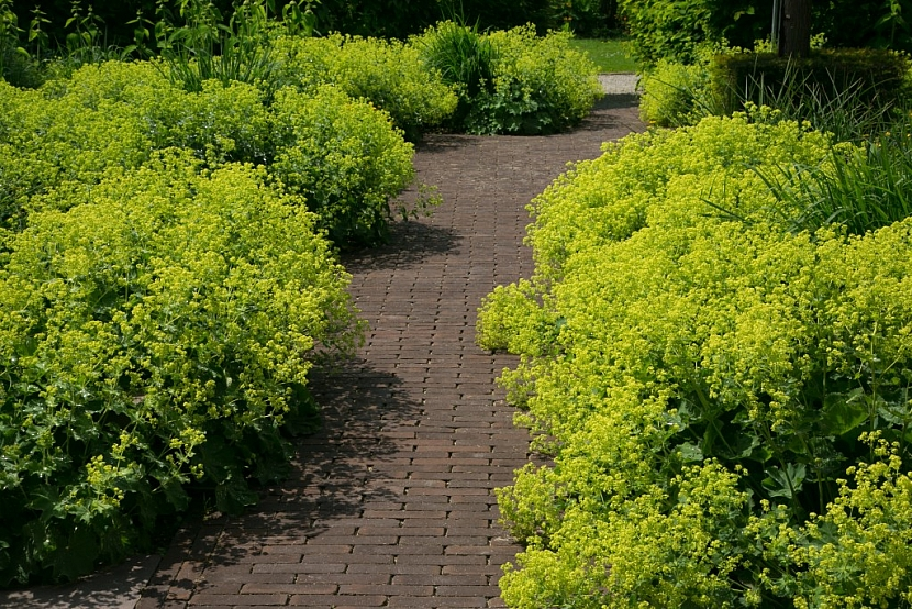 Použití dlažby na zahradě - cihlová dlažba se hodí do romantických a rustikálních zahrad, zde ji doplňuje kontryhel
