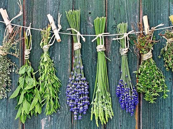 Vypěstujte si bylinky stylově (Zdroj: Depositphotos)