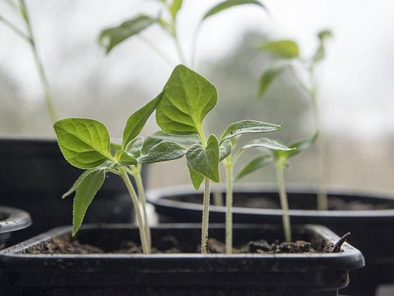 Předpěstujte si úrodu s pomocí sadbovačů (Zdroj: Depositphotos)