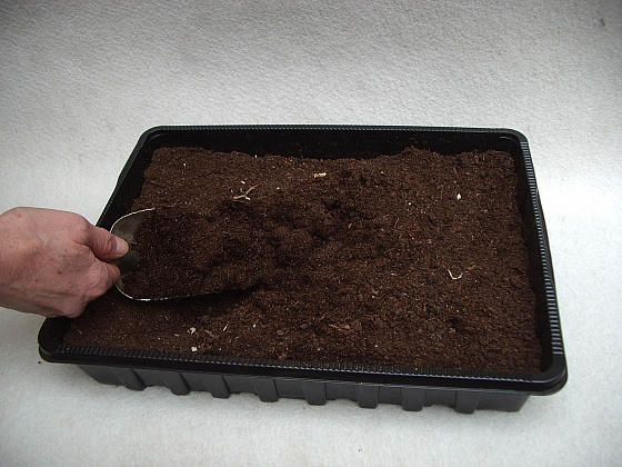Výběr substrátu pro výsev je vcelku zásadní záležitost, jak rostliny pěstovat (Zdroj: Jan Kopřiva)