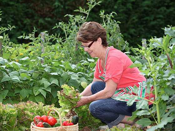 Smíšená kultura zeleniny přináší užitek v podobě větší úrody i zdraví rostlin (Zdroj: Depositphotos)