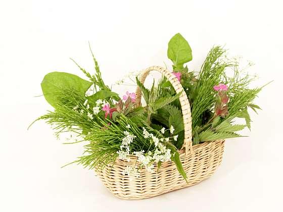 Jedovaté a nebezpečné plevely, které se zcela určitě vyskytují i na vašich záhonech (Zdroj: Depositphotos)