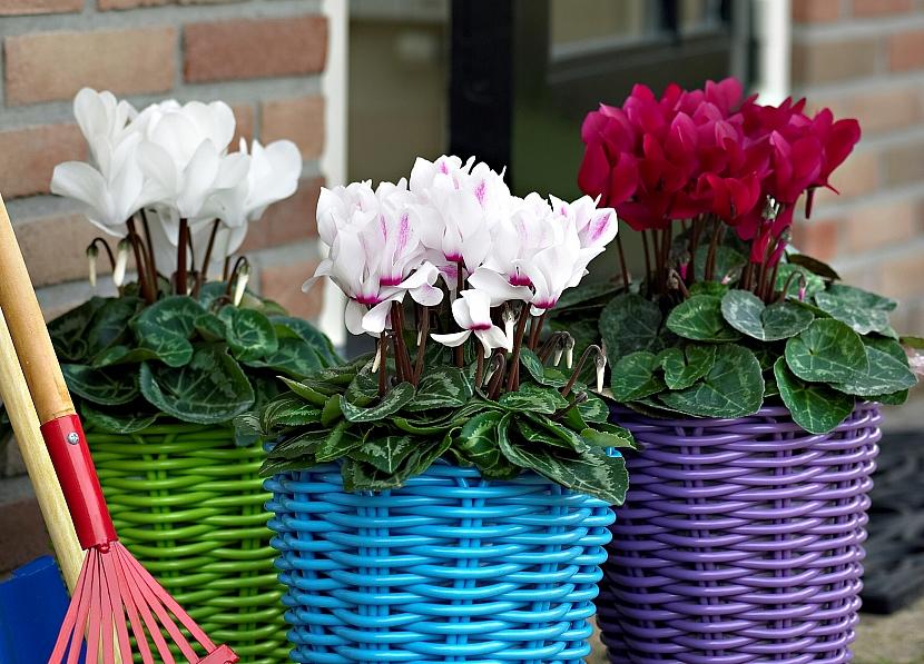 Jak můžete vyzdobit balkon méně tradičními květinami 3