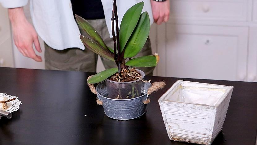 Česnekový životabudič pro orchideje aplikujeme jen jednou za měsíc