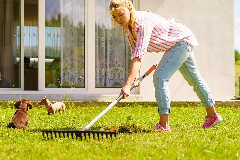 Hrabání trávníku