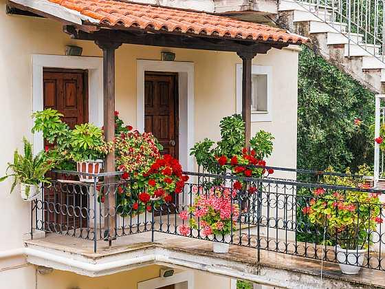 Desatero zeleně, které se daří i na balkoně (Zdroj: Depositphotos)