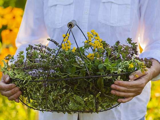 Jak zpracovat sklizené bylinky? Poradíme (Zdroj: Depositphotos (https://cz.depositphotos.com))