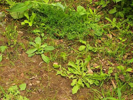 Plevel v zahradě nejsnáze zlikvidujete ručně, bez pomocí chemie (Zdroj: Depositphotos (https://cz.depositphotos.com))