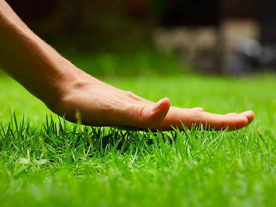 Krásný trávník potřebuje dobrou péči. Zdraví mu zajistí správné zazimování (Zdroj: Depositphotos (https://cz.depositphotos.com))