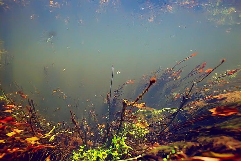 Kvalita vody v jezírku
