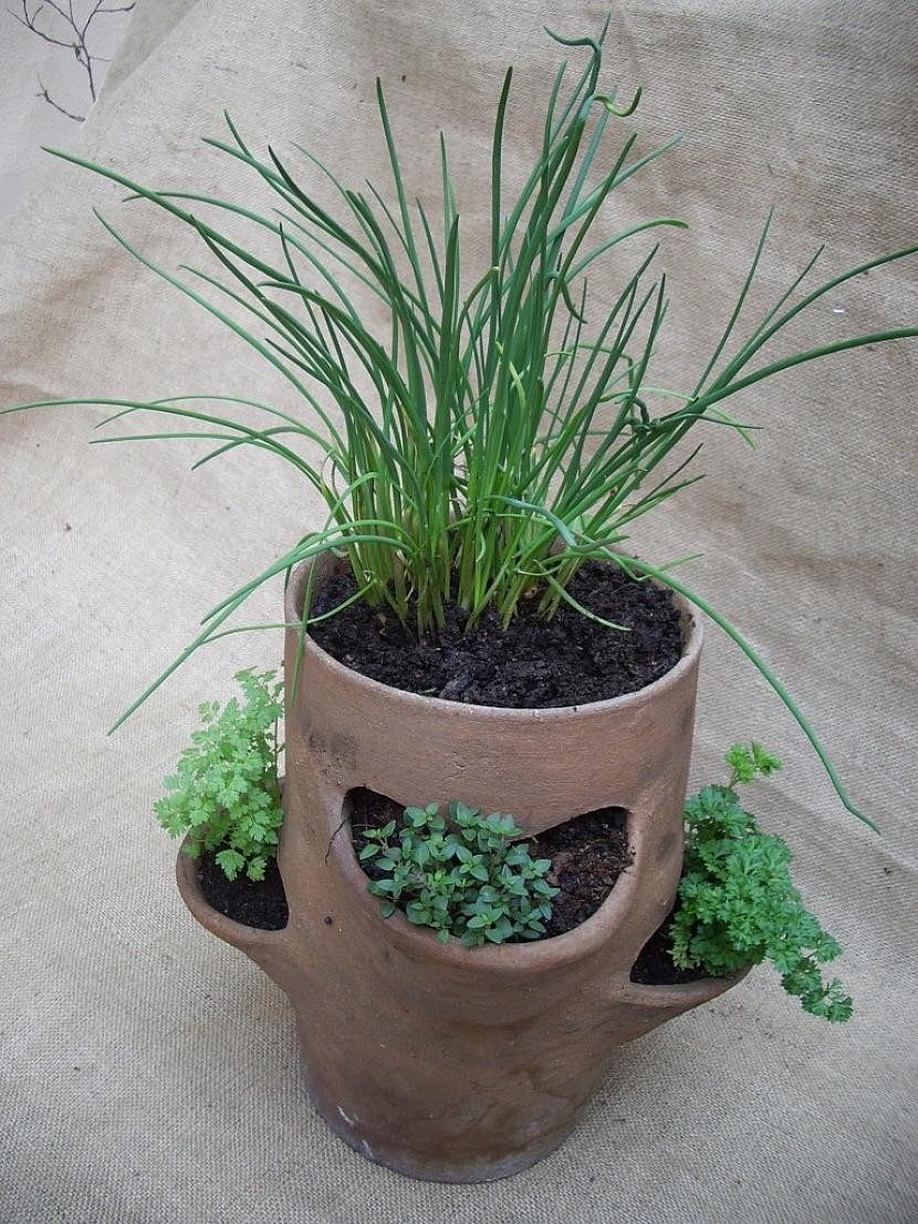 Pro vysazení více bylinek na malém prostoru je dobré použít bylinkový hrnec