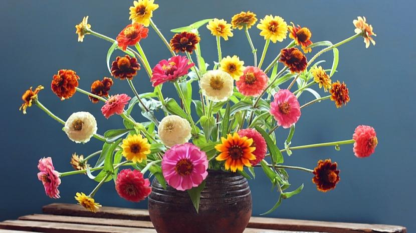 Zínie neboli ostálky jsou výborné květiny k řezu do vázy