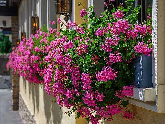 Chcete mít záplavu květů a bohatou úrodu? Základem je kvalitní hnojivo (Zdroj: AGRO CS)