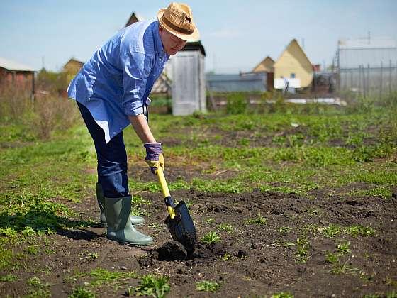 Rytí záhonů provádějte několik dní po sklizni nebo až na podzim, ale nenechejte půdu prázdnou (Zdroj: Depositphotos (https://cz.depositphotos.com))