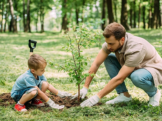 Výsadba stromků podle půdy je velmi zodpovědná záležitost (Zdroj: Depositphotos)