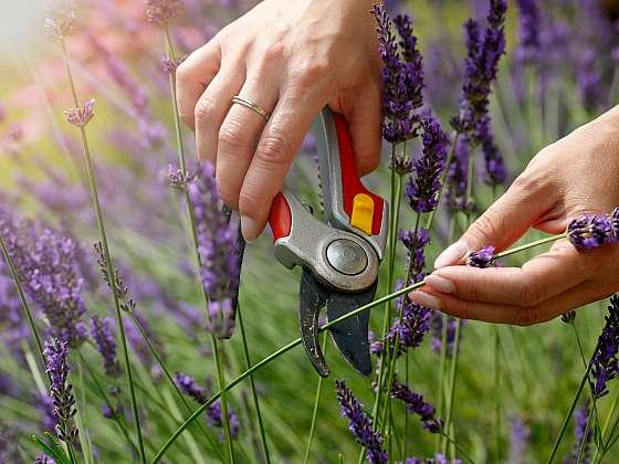 Srpnové práce na zahradě jsou v plném proudu (Zdroj: Shutterstock)
