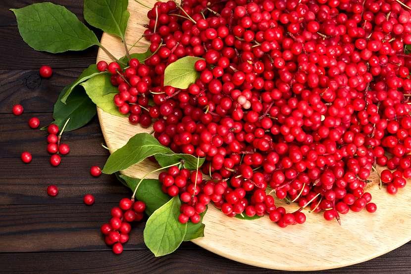 Plody klanoprašky