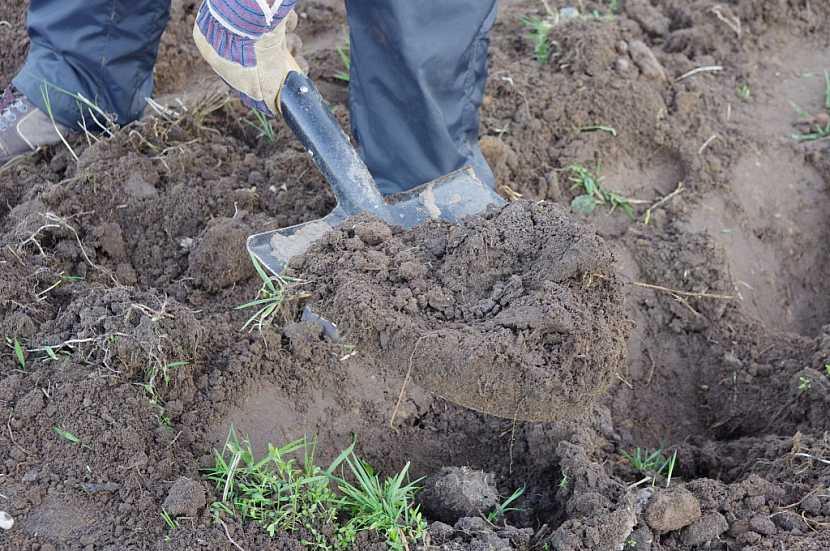 Rytí je důležitá procedura, zlepšuje totiž vlastnosti půdy