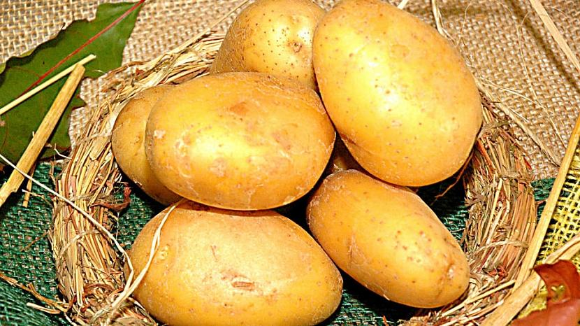 Velmi raná odrůda Astoria