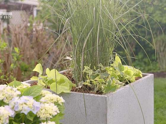 Moderní betonové květináče budou ozdobou vaší zahrady (Zdroj: Prima DOMA)