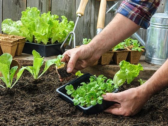 Víte, jaké typy zeminy a substrátů máme?