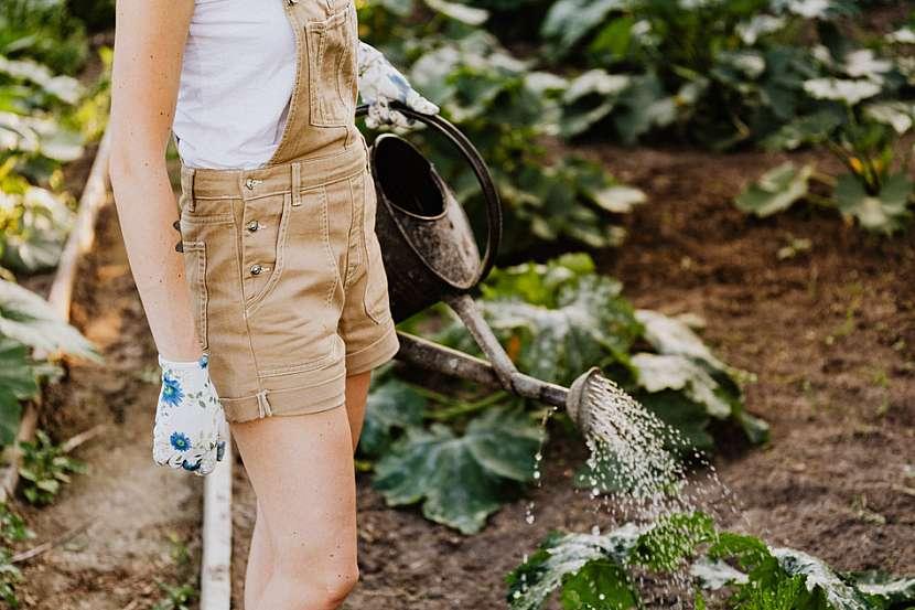 Zahradnice, konev