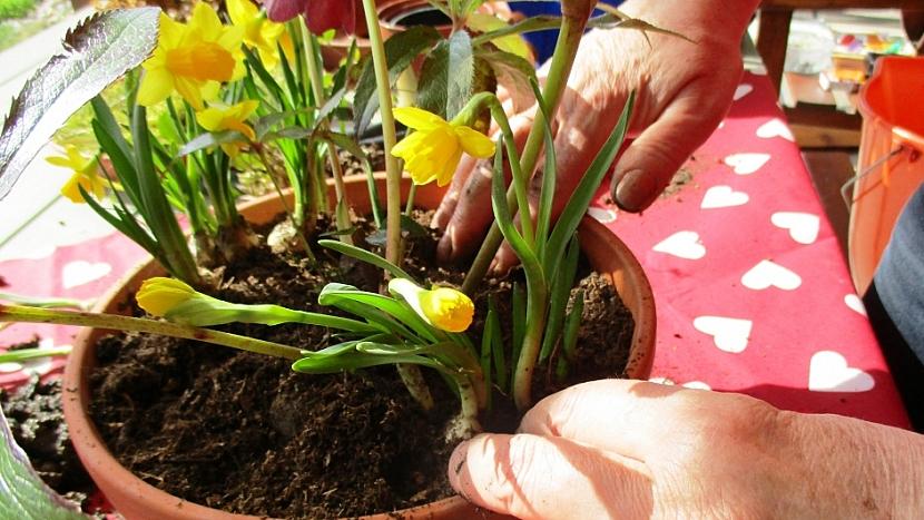 Jak si udělat minizahrádku aneb dopřejte si jarní květinový doping 4