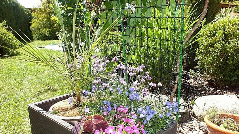 Chytrá síť poslouží jako opora květin v truhlíku nebo okurek, rajčat či fazolí