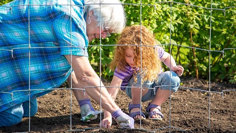 Předpověď počasí a zahrada: zasejte semínka