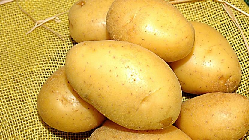 Pěstování brambor: odrůda Impala