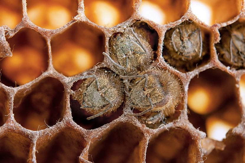 Mrtvé včely