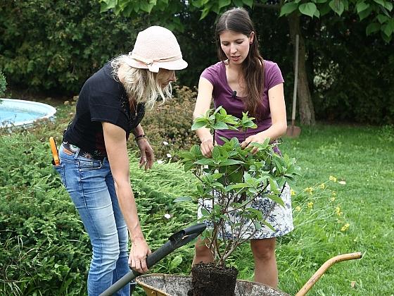 Výhody podzimní výsadby stromků a keřů (Zdroj: archiv FTV Prima)